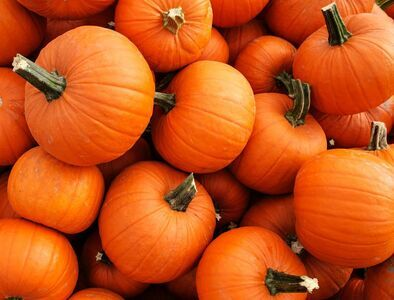 Habitat for Humanity Pumpkin Patch & Trick or Treat
